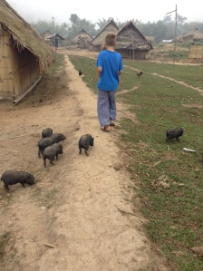 Braxton and some Lanten piglets