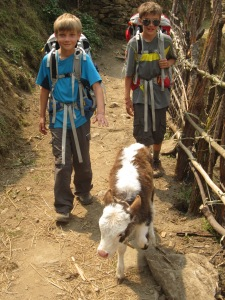 Trekking with livestock, Thulo Syaphru
