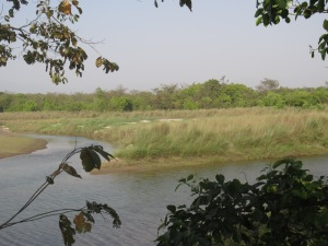 Tiger territory, Bardia National Park