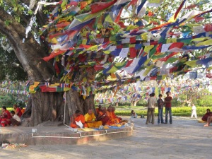 Monks under a bodhi tree, Lumbini, Nepal
